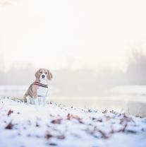 Bubla ve sněhu